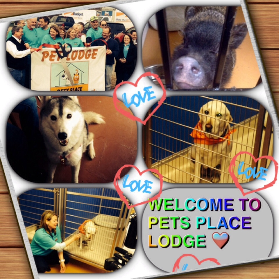 Pets Place Lodge